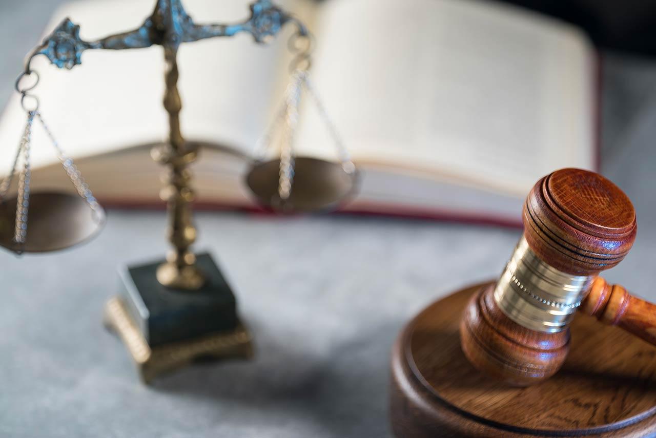 I limiti di raccolta e tutte le controversie legate alla nuova legge del tartufo