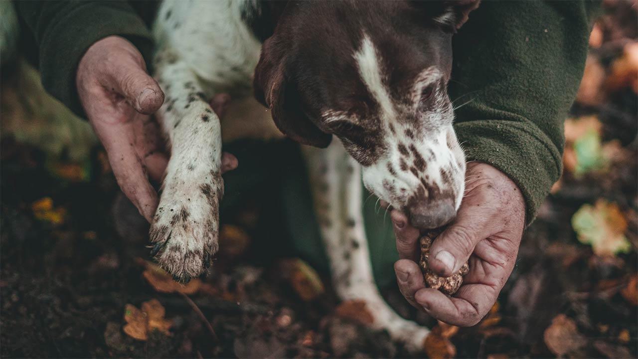 Tartufo per addestramento cani: come usarlo e consigli utili