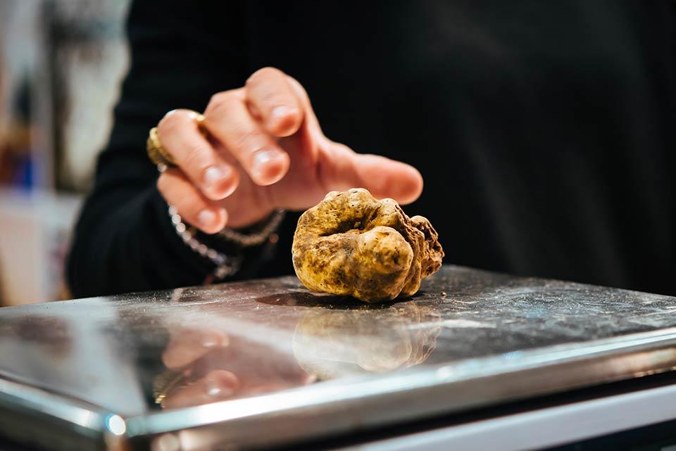 Il prezzo del tartufo bianco rimane nella media stagionale, nonostante la pessima stagione di raccolta