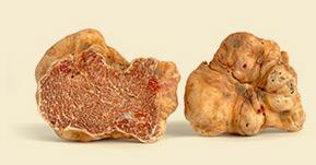 Compra tartufo fresco online
